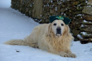 Jasper, our old boy, the perfect gentle dog